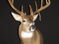 Deer Game Head 002
