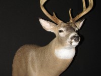 Deer Game Head