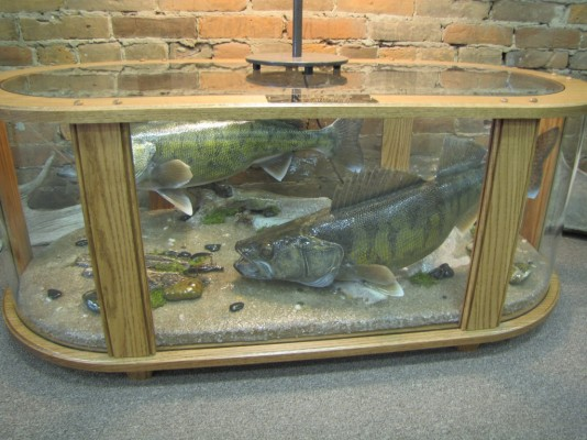 Coffee Table Fish Mount Dan S Wildlife Creations