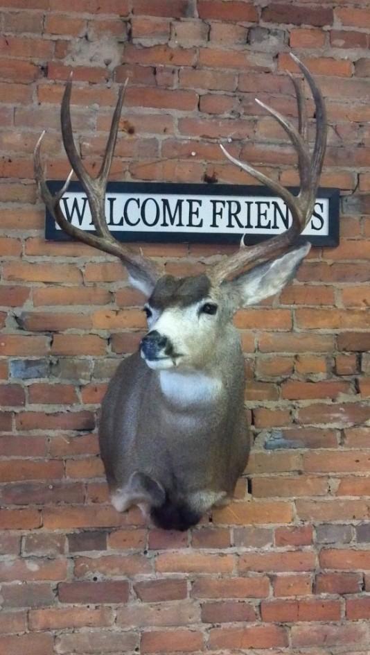 Dan\'s Wildlife Creations mule deer 2011