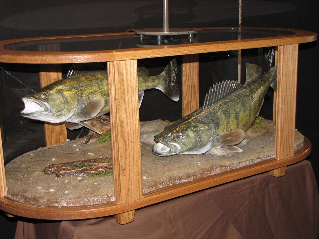 Perfect Coffee Table Fish Mount